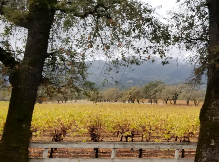 Sonoma Strong Wine Tasting Adventure by Impeccably Paired
